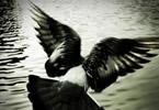 A BIRD NAMED RE-LOO